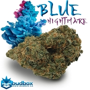 Blue Dream Nightmare