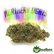 Northern Lights Indica