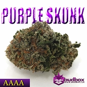 Purple Skunk AAAA