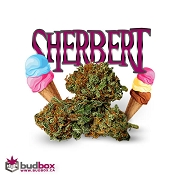 Sherbert Cannabis Flower