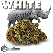White Rhino Cannabis Flower