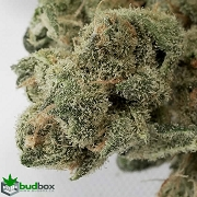Blue Dream - Sativa Hybrid