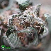 Love Potion #1 - Hybrid Sativa