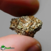 Sour Diesel Small Buds
