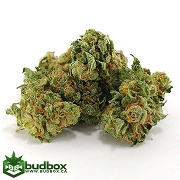 Blueberry Kush - Small Buds