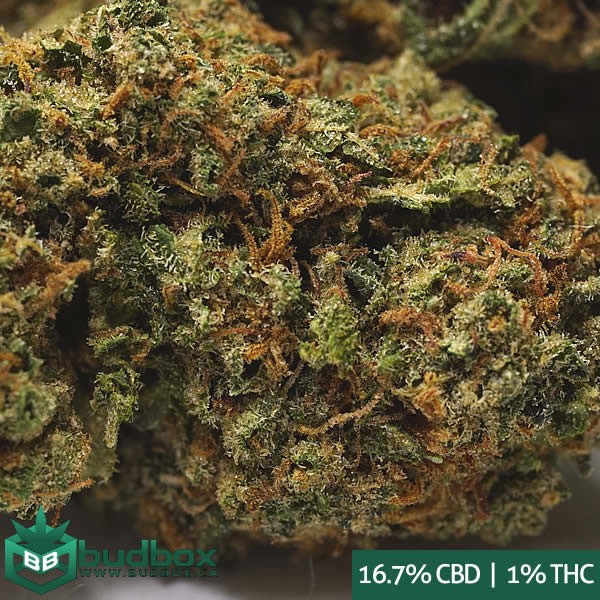 Charlotte's Web Cannabis Strain - High CBD - Medical Marijuana Canada